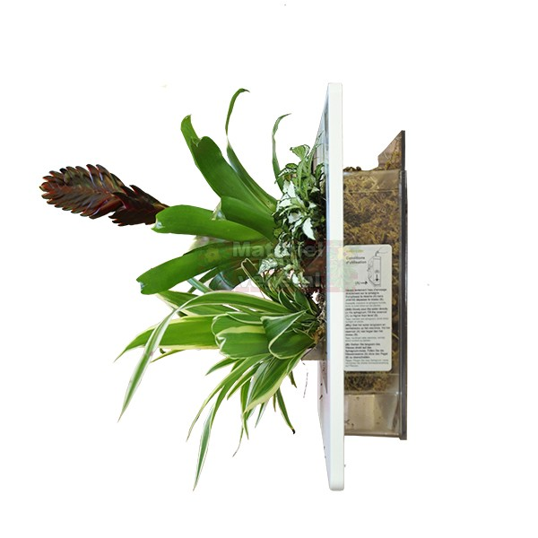 Cadre v g tal double horizontal blanc 49x30cm garden and for Flowall pas cher