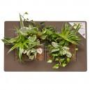 Cadre végétal Arden Flore Double Artichaut 49x30cm