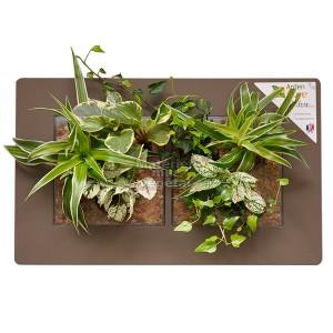 http://www.materiel-mur-vegetal.fr/912-1650-thickbox/cadre-vegetal-double-horizontal-artichaut-49x30cm-garden-and-the-city.jpg