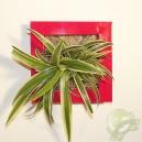 Cadre végétal Be Green Rouge 19x19cm avec Chlorophytum