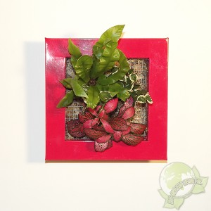 http://www.materiel-mur-vegetal.fr/927-1692-thickbox/cadre-vegetal-be-green-rouge-19x19cm-avec-mix-3-plantes.jpg