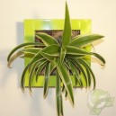 Cadre végétal Be Green Vert Anis 19x19cm avec Chlorophytum