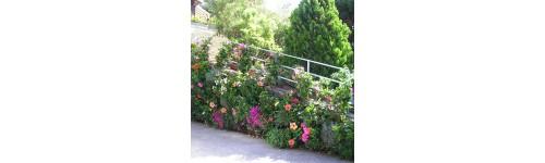 Plantes pour mur v g tal tableaux v g taux d 39 ext rieur packs et lots de plantes en vente sur - Plantes pour mur vegetal exterieur ...