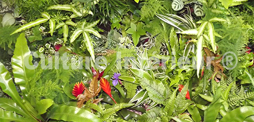 Plantes mur végétal intérieur