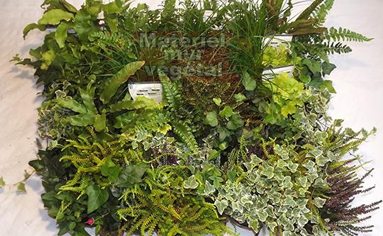 Pack 4 kits mur v g tal ext rieur brique verte 36x39cm for Mur vegetal exterieur quelles plantes