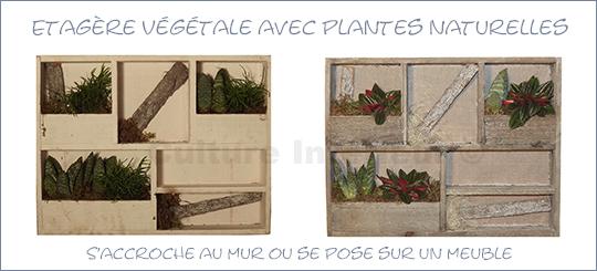 Cadre Etagère végétale Wooden 38x29cm avec plantes Succulentes