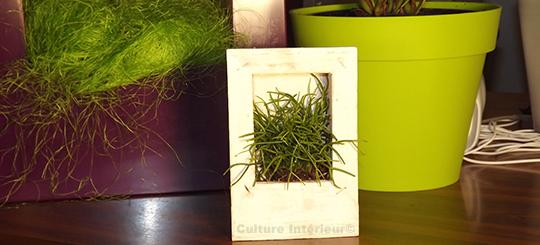 Cadre végétal Wooden Blanc 15x10cm avec plante succulente