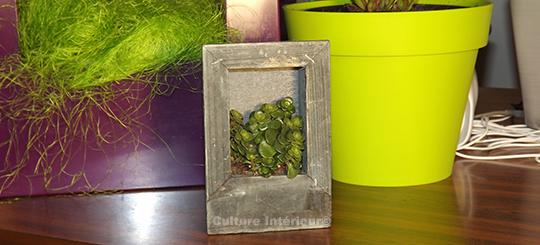 Cadre végétal Wooden Gris 15x10cm avec plante succulente
