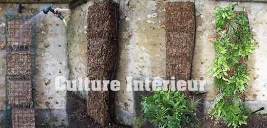 Kit mur végétal modules de sphaigne avec plantes & irrigation
