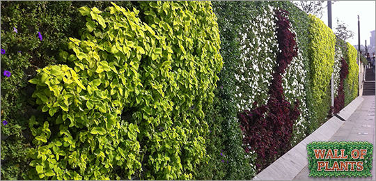 Mur végétal avec modules Dual Pot Wall Of Plants