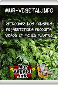www.mur-vegetal.info