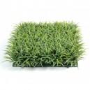 Plaque d'herbe grasse artificielle 25,5x25,5cm