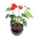 Anthurium artificiel 45cm 2 fleurs sur pique