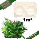 40 Modules Dual Pot Ø8cm Blanc 20x12,5cm avec 80 plantes d'intérieur