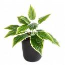 Hosta mini artificiel 30cm 14 feuilles sur pique