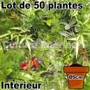 Lot de 50 plantes pour mur végétal intérieur