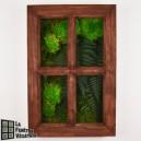 Tableau végétal stabilisé Fenêtre Végétale 60x40cm Teck
