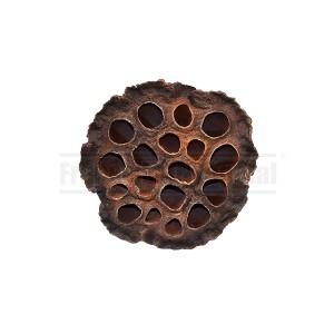 https://www.materiel-mur-vegetal.fr/1345-2784-thickbox/fleur-de-lotus-o8-10cm.jpg