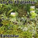 Lot de 10 plantes pour mur végétal extérieur