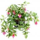 Fuchsia artificiel rose 45cm sur pique