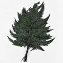 Fougère Rumohra stabilisée Vert 10 feuilles
