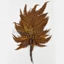 Fougère Rumohra stabilisée Marron 10 feuilles