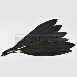https://www.materiel-mur-vegetal.fr/1428-3160-thickbox/cordyline-stabilisee-vert-6-feuilles.jpg
