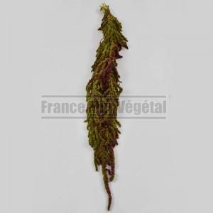 https://www.materiel-mur-vegetal.fr/1430-3170-thickbox/amaranthe-stabilisee-vert-citron-rouge.jpg