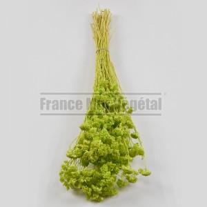 https://www.materiel-mur-vegetal.fr/1435-3192-thickbox/fleurs-stabilisees-achilea-vert-citron.jpg