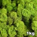 Lichen Scandinave stabilisé Vert Citron 1kg
