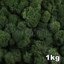 Lichen Scandinave stabilisé Vert Foncé 1kg