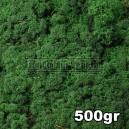 Lichen Scandinave stabilisé Vert Moyen 500gr
