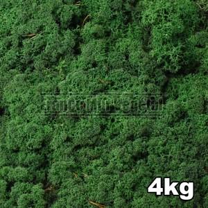 https://www.materiel-mur-vegetal.fr/1446-3215-thickbox/lichen-scandinave-stabilise-vert-moyen-4kg.jpg