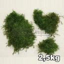 Mousse plate séchée Vert Clair 2,5kg