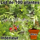 Lot de 100 plantes pour mur végétal intérieur