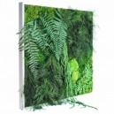 Tableau végétal stabilisé PicaGreen 60x60cm