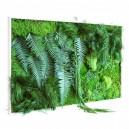 Tableau végétal stabilisé PicaGreen Maxi Horizontal 114x64cm