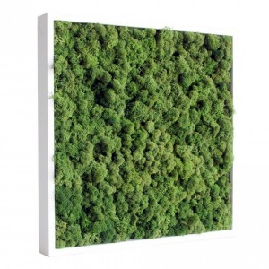 https://www.materiel-mur-vegetal.fr/398-775-thickbox/tableau-vegetal-stabilise-lichen-vert-nature-40x40cm.jpg
