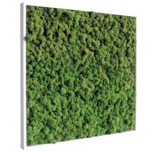 https://www.materiel-mur-vegetal.fr/401-778-thickbox/tableau-vegetal-stabilise-lichen-vert-nature-60x60cm.jpg