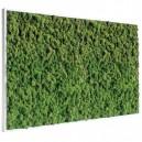 Tableau végétal stabilisé Lichen Vert Nature Maxi 114x64cm