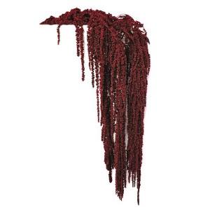 https://www.materiel-mur-vegetal.fr/648-1167-thickbox/amaranthe-stabilisee-rouge-200gr.jpg