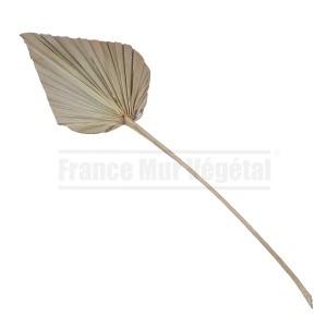https://www.materiel-mur-vegetal.fr/683-2829-thickbox/feuillage-palm-spear.jpg