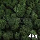 Lichen Scandinave stabilisé Vert Foncé 4kg