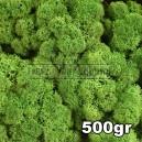 Lichen Scandinave stabilisé Vert Forêt 500gr