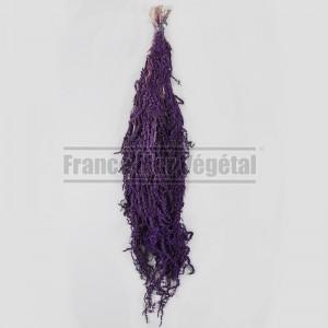 https://www.materiel-mur-vegetal.fr/852-3177-thickbox/amaranthe-stabilisee-violette-200gr.jpg