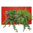 Cadre végétal Arden Flore Double Rouge 49x30cm