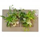 Cadre végétal Arden Flore Double Lin 49x30cm